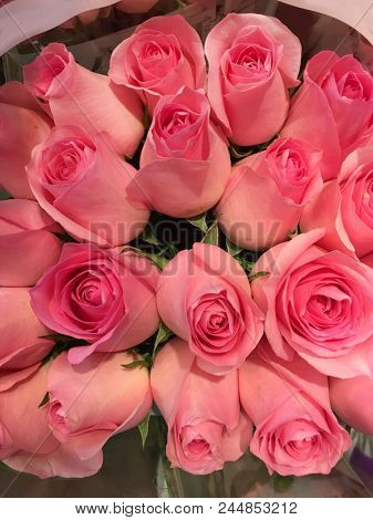 bouquet pink rose  background