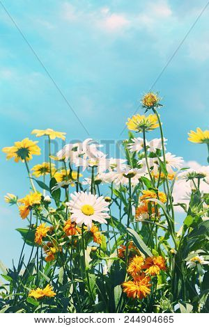 Summer flowers against a blue sky