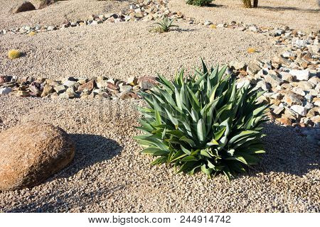 Desert Landscaping With Native Drought Tolerant Agave Succulents, Golden Barrel Cacti, Natural Bould