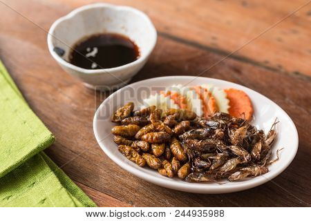 Insect Food Collection - Cricket, Worm Insects With Cucumber And Carrot In A White Plate. Healthy Me