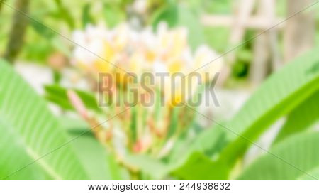 Blurred Of Flower - Blurred Image Of Flowers In A Forest On A Sunny Day. Background-abstract, Graphi