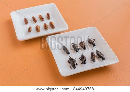 Fried Insects - Cricket And Woodworm, Edible Insects On A White Plate With Wooden Background, Select