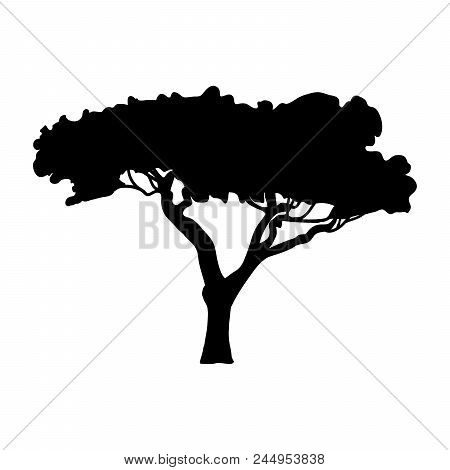 Silhouette Acacia Icon Tree Flora. Vector Illustration