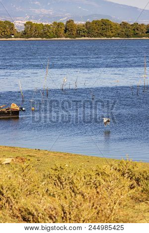 Gray Heron Flying Towards A Fishing Boat Stern Close To The Deep Blue Water Surface With Wooden Stic