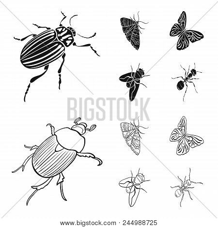 Arthropods Insect Beetle, Moth, Butterfly, Fly. Insects Set Collection Icons In Black, Outline Style
