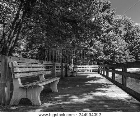 Shaded Bench In Park Setting Black And White