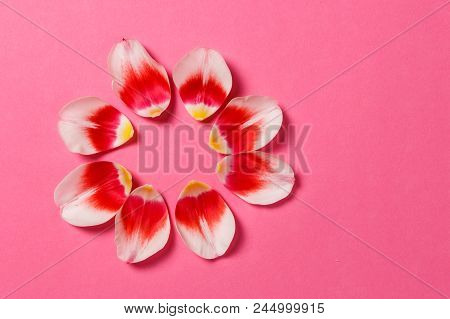 Feminine Stylish Mock Up With Tulip Flower, Petals. Copy Space For Your Design, For Weddings, Invita