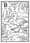 Coloring book for children, colorless alphabet. Letter I, ibis poster
