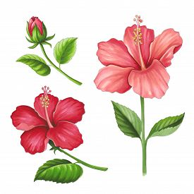 Hibiscus Flowers On A White Background. Sketch Done In Alcohol Markers. You Can Use For Greeting Car