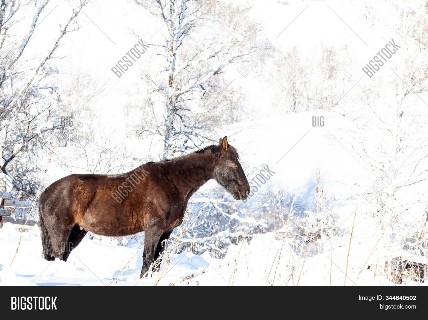 Lone Black Horse Image Photo Free Trial Bigstock