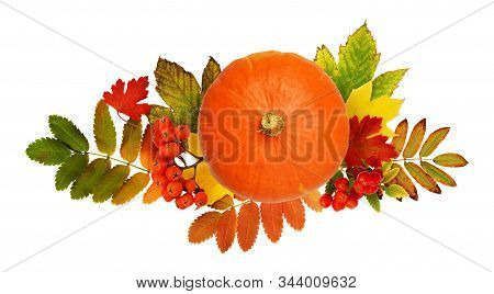 Round Pumpkin, Rowanberries And Autumn Colorful Leaves Isolated On White Background. Top View. Flat
