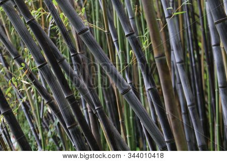 Bamboo Forest With Green And Dark Rods