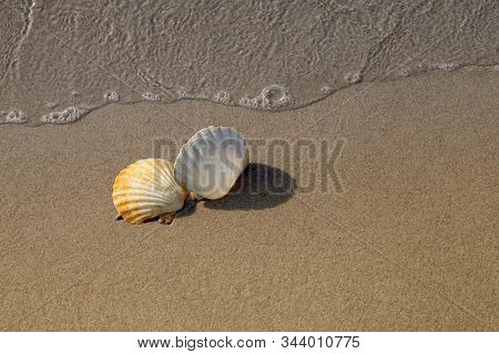 Two Conch Shells On Beach With Waves.