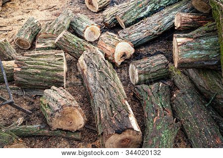 Logs Covered With Moss. Cut Stack Of Logs. Stack Of Firewood. Woodpile Of Chopped Logs Prepared For