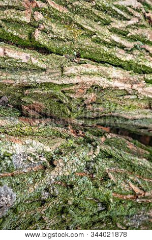 Bark Of A Tree Covered With Moss. Logs For Firewood. Stack Of Firewood. Woodpile Of Chopped Logs Pre