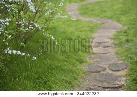 Path In Ornate Flower Garden. Natural Background