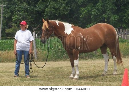 Horsewoman With Paint