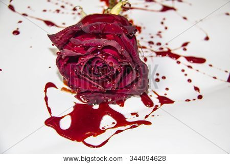 A Bloody Rose On A White Background. A Burgundy Rose In The Blood