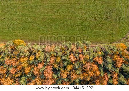 Overhead Drone Shot Of Yelow Pine Trees By Highway And Green Field In Luneberg Heide Forests
