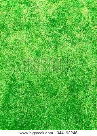 Green Green Grass. Natural Background. Green Grass Background Texture. Spring Season. Summer Nature.