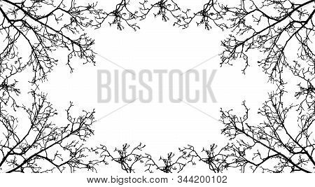 Frame From Branches Tree, Silhouette Of Branch Rowan Tree. Vector Illustration. Applied Clipping Mas