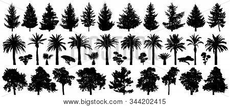 Trees Set Isolated. Forest Background, Nature, Landscape. Pine, Spruce, Christmas Tree, Palm Tree, B