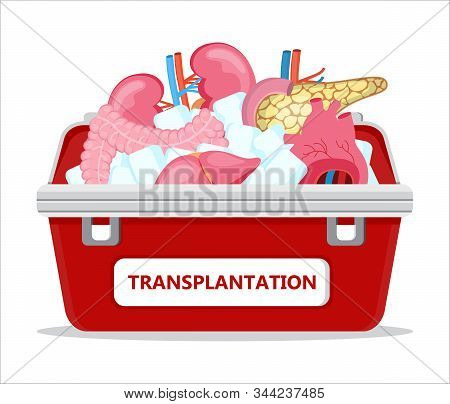Human Organ Donor Transplantation Concept Vector For Banner, Flyer, Medical Website. Medical Red Cas