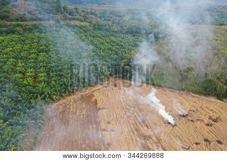 Deforestation. Land clearing and burning to make way for palm oil plantations.