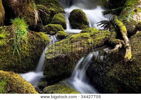 forest creek streaming between vivid green loss. Beautiful nature during spring time. Concept for purity and wilderness unspoiled fresh running water. small waterfall current in brook.