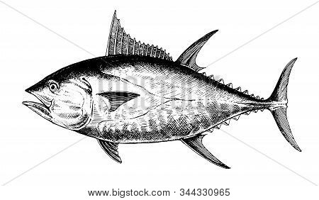 Tuna Bluefin, Fish Collection. Healthy Lifestyle, Delicious Food. Hand-drawn Images, Black And White