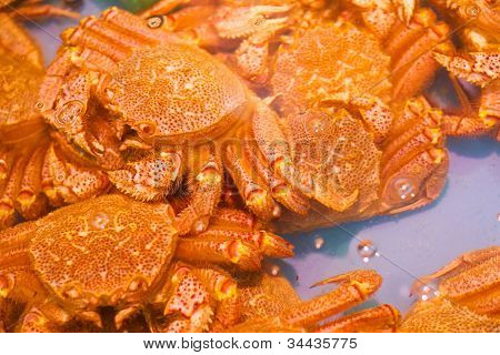 Hokkaido crab in Hakodate Morning Market, Hokkaido, Japan