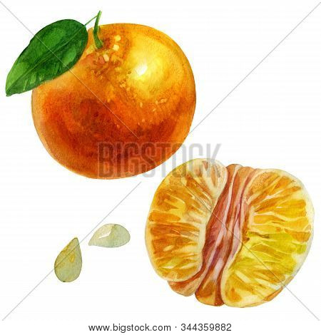 Watercolor Illustration, Set. Whole Tangerine In A Peel. Purified Half Tangerine. Mandarin Leaf, Tan