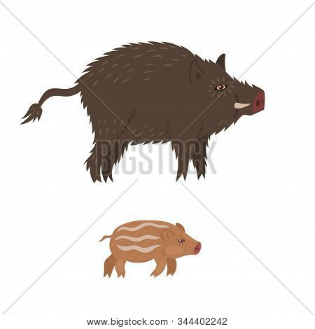 Wild Boar And Cub Isolated On White Background. Vector Vector.