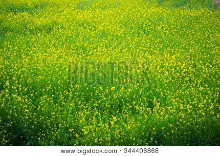 View Of Mustered Field In Agra, India