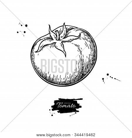 Tomato Vector Drawing. Isolated Tomato And Sliced Piece. Vegetable Engraved Style Illustration