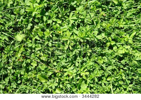 image of real green grass on field poster