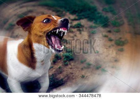 Angry Dog. Dangerous Aggressive Dog. Dog Attack.