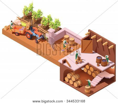 Vector Isometric Winery And Wine Making Process. Wine Makers On Grapes Harvesting On Vineyard, Crush