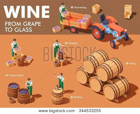 Vector Isometric Wine Making Process. Wine Makers On Grapes Harvesting On Vineyard, Crushing And Pre