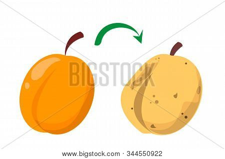 Rotten Apricot And Fresh Fruit Vector Isolated. Food Waste. Vegetarian Food Rot And Become Bad. Dang