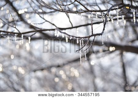 Winter Tree Branches In Motion With Icicles