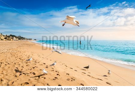 Seagulls Flying On Beach In Albufeira Resort Village At Sunset. Wide Sandy Beach Praia De Albufeira