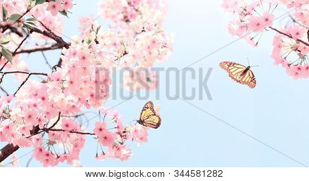 Branch of the blossoming sakura with pink flowers and two butterflies. On sunny blue sky background. Mock up template. Copy space for text