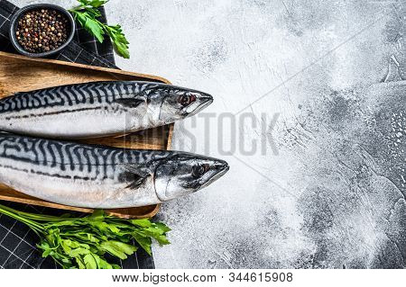 Raw Mackerel Fish With Parsley And Pepper. Fresh Seafood. Gray Background. Top View. Space For Text
