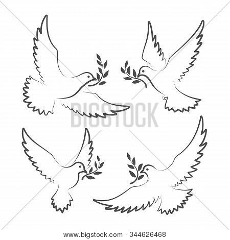 Dove Signs. White Doves With Olive Branch Symbols, Pigeon Of Peace Vector Illustration, Christian Ho
