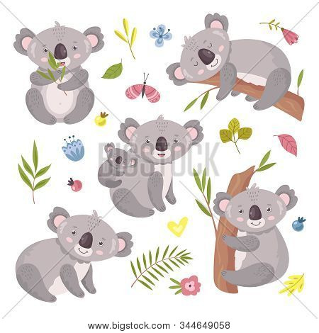 Koala bear. Australia animal, baby hugging mom. Isolated koalas on tree, flowers and nature elements. Vector exotic cuddly characters set. Illustration koala australia, wildlife mammal climb to tree poster