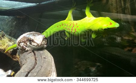 Beautiful Frog And Gecko Bask In The Rays Of Light