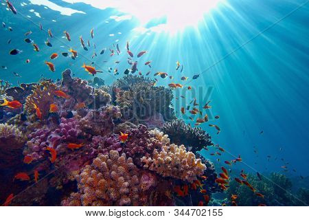 Life-giving Sunlight Underwater. Sun Beams Shinning Underwater On The Tropical Coral Reef. Ecosystem