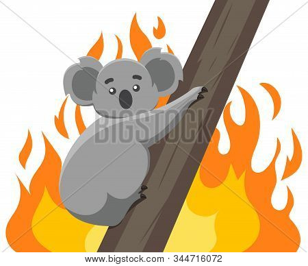 Fires In The Habitats Of Koalas. Ecological Disaster In Australia. Vector Modern Design Illustration