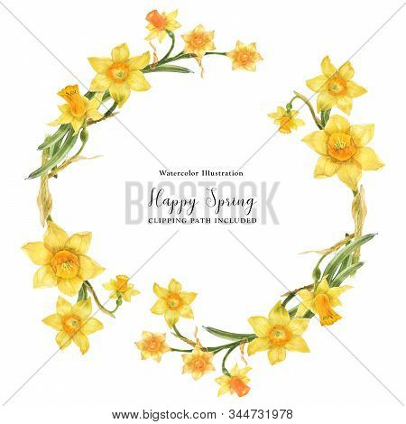 Daffodil Flowers In Floral Watercolor Wreath On A White Background, Watercolor With Clipping Path